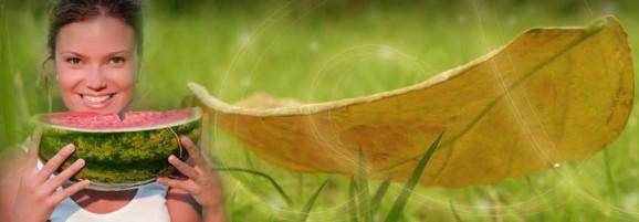 cerita legenda semangka emas